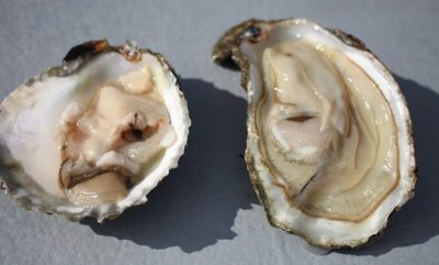 Zeeuwse oesters uit het Grevelingen meer