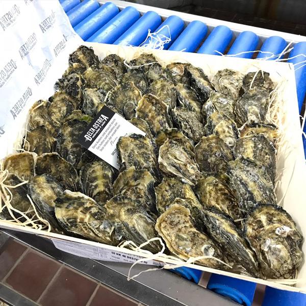 HK46 oester